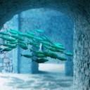 underwater-1216244_640