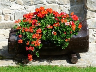 flowers-177404_640