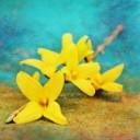 gold-shrub-1318827_640