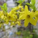 spring-700744_640