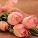 tulips-2068649_640
