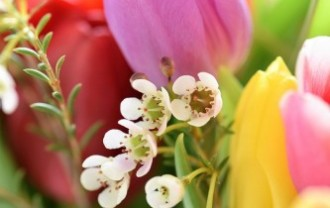 tulips-2091407_640