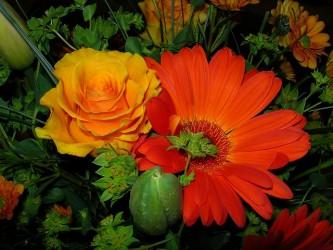 flower-1179671_640
