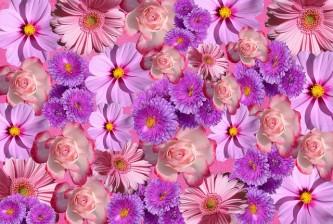 flowers-1792448_640