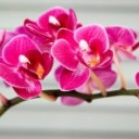 orchid-1808208_640