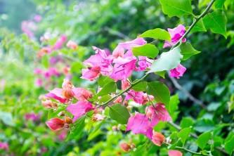 flower-923672_640