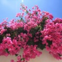 flowers-11131_640