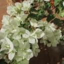 wildflower-238074_640