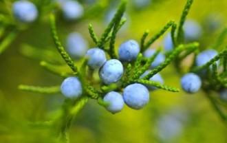 berries-221193_640