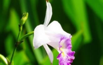 flower-2432906_640