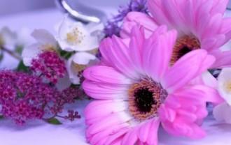 flower-2459523_640
