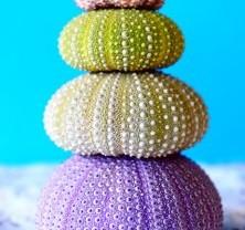 sea-urchins-663508_640