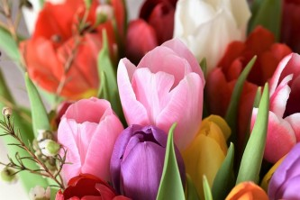 tulips-2091412_640