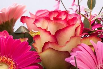 roses-279217_640