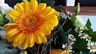flowers-2532818_640