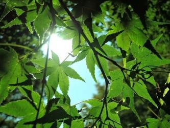 sunbeams-1904485_640