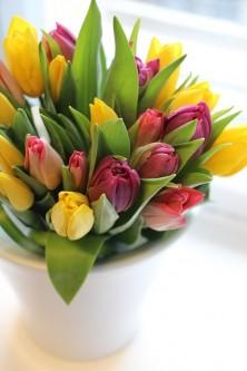 tulip-2340441_640