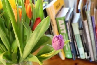 tulips-2214156_640
