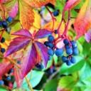 foliage-2828520_640