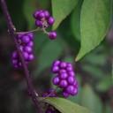 berry-2891191_640