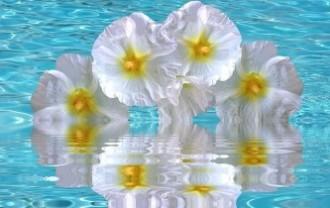 hibiscus-2623990_640