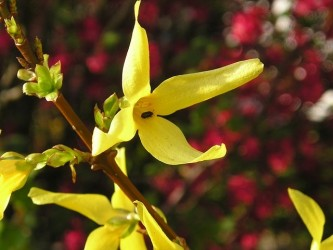 yellow-1006943_640