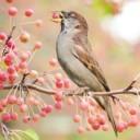 bird-2823763_640