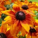 sun-hat-3127163_640