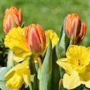bouquet-3308298_640