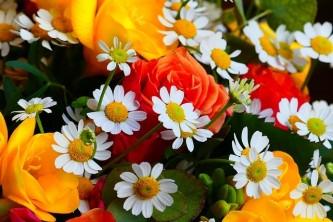 flower-3347629_640