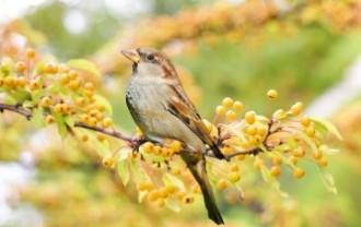 bird-2847799_640