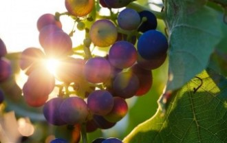 grapes-3550742_640