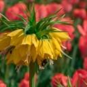 flower-4136977_640