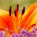 lily-garden-4287748_640