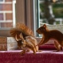 squirrel-4659600_640