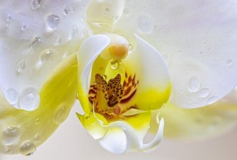 orchid-4920533_640