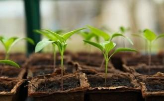 seedling-5009286_640
