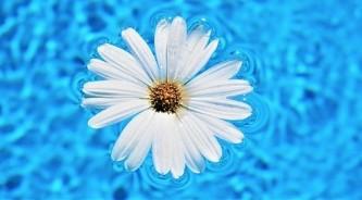 daisy-flower-5147010_640