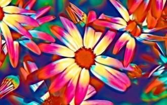 flowers-5131809_640