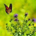 butterfly-1990204_640