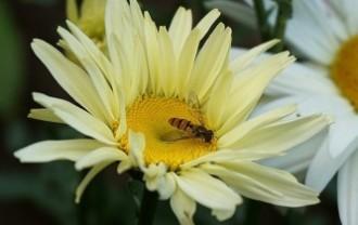 flower-5475952_640