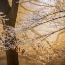 winter-3970434_640