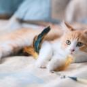 cat-5830643_640